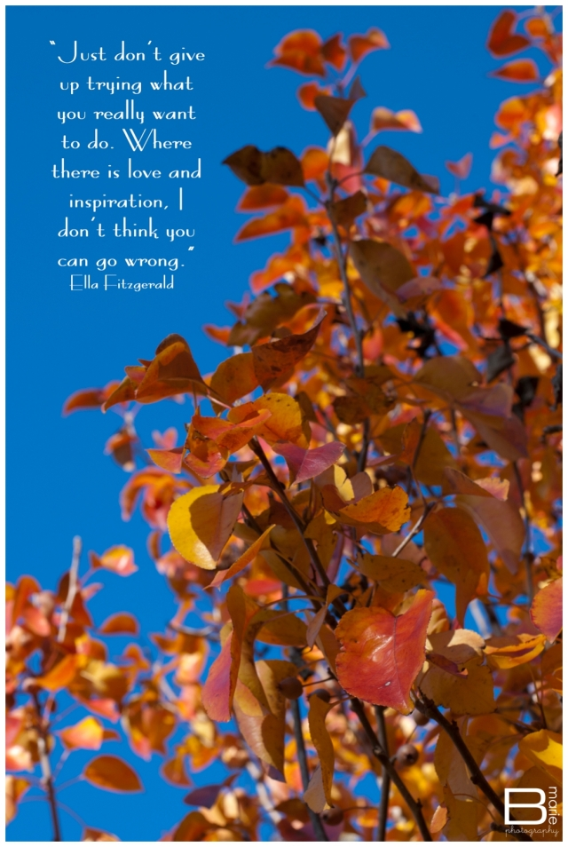 Nacogdoches photographer photo of a fall tree and blue sky with inspirational quote by Ella Fitzgerald