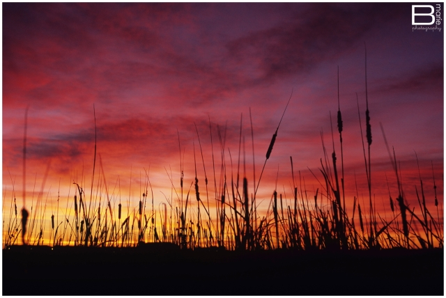 Nacogdoches photographer image of a rich-colored Lubbock sunrise through cattail plants
