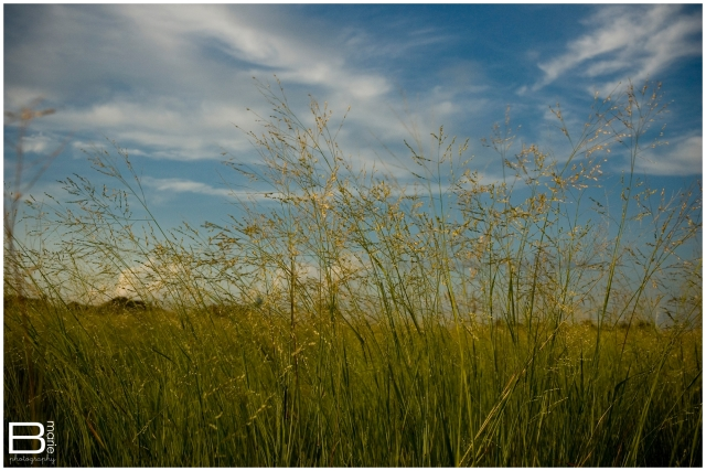 Nacogdoches photographer - green field with blue sky and white clouds during golden hour