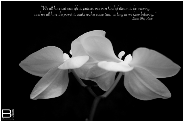 Nacogdoches photographer photo of white orchids with inspirational quote from Louisa May Alcott