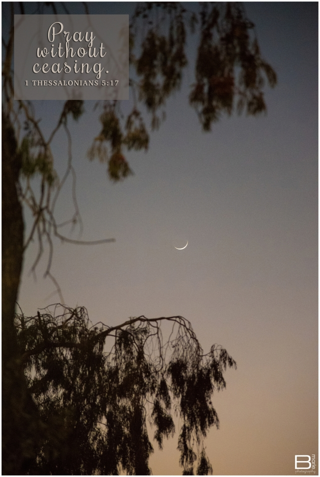 Nacogdoches photographer twilight view of sliver moon through trees with 1Thessalonians 5:17