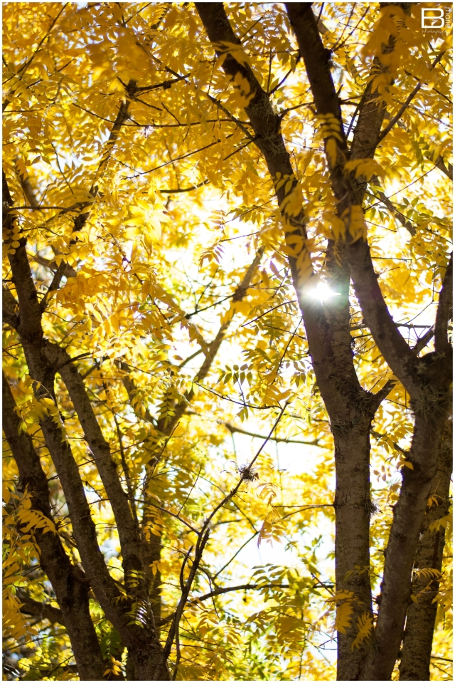 Nacogdoches Photographer image of light streaming through golden yellow tree leaves
